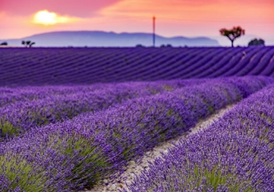 """""""Hot lavender, mints, savory, marjoram; The marigold, that goes to bed wi' the sun, and with him rise weeping.""""  ~ William Shakespeare"""